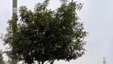 唐山有计划推行树葬吗?